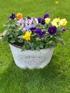 Winter Pansies| Florists Widnes | Flowers by Carol