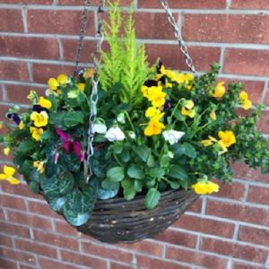 Hanging Baskets| Florists Widnes | Flowers by Carol
